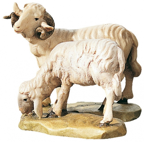 Ram with Sheep